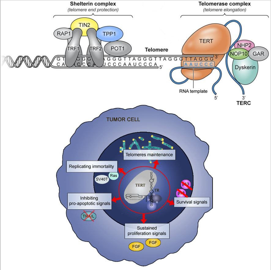 Success for the therapeutic vaccine INVAC-1 in cancer - Invectys
