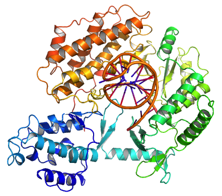 Telomerase Structure